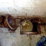 Tìm hiểu dịch vụ khử mùi hôi nhà vệ sinh chuyên nghiệp- giá thành hợp lý