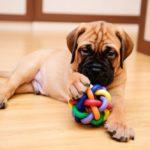 Cách khử mùi chó trong nhà hiệu quả không nên bỏ qua