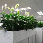 Tuyệt chiêu tạo mùi thơm cho công ty, giúp nhân viên hưng phấn làm việc