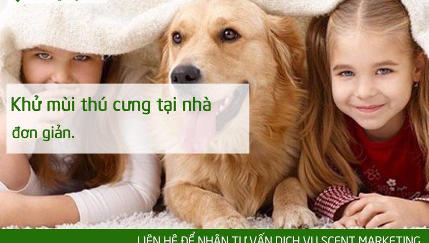 khử mùi thú cưng tại nhà