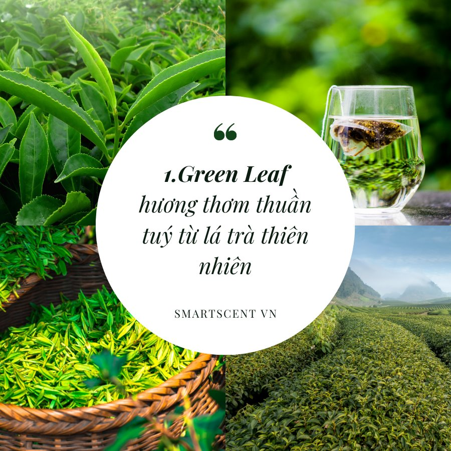 Hương thơm thư giãn từ trà xanh mang đến cảm giác thư giãn nhanh chóng