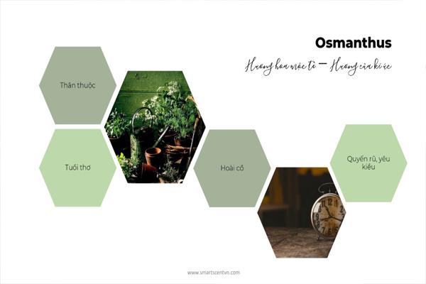 Tạo thơm cho spa với tinh dầu Osmathus
