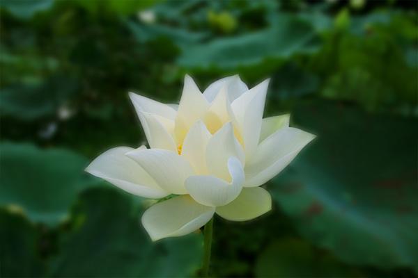 tạo mùi cho trung tâm tiếng anh với tinh dầu lotus